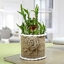 Lucky Bamboo Plant For Mom: Good Luck Plants - Friendship Day