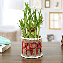 Lucky Bamboo Plant For Papa: Birthday Gifts for Father