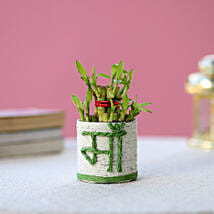 Lucky Bamboo Plant to Mom: Send Plants for Mothers Day