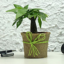 Lucky Money Tree: Send Plants for Mothers Day