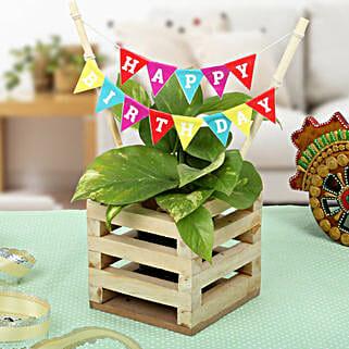 Make It Best Birthday Gift: Plants to Pune