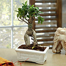 Marvellous Bonsai Plant: Send Plants to Indore