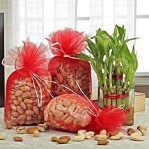 Mixed With Luck N Love: Send Plants n Dry Fruits