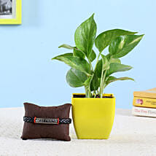 Money Plant & Friendship Band: Bonsai Plants