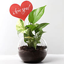 Money Plant Terrarium With Love You Tag: Plants for anniversary