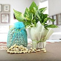 Money Plant with Cashews: Send Diwali Gifts for Him