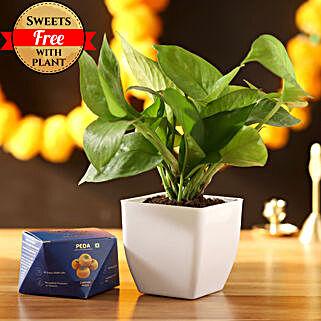 Money Plant With Sweet Peda: Diwali Sweets Ahmedabad