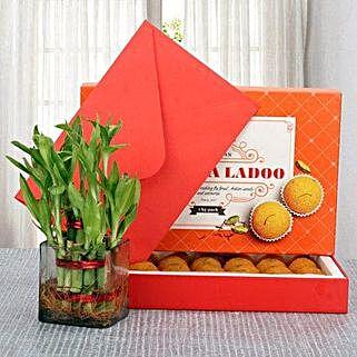 Moti Choor Opulence: Send Lucky Bamboo to Pune