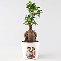 Personalised Ficus Ginseng For Rakhi: Personalised Pot plants