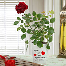 Personalised Red Rose Plant: Valentine Gifts Amritsar