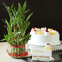 Pineapple Cake With Three Layer Bamboo Plant: Cakes to Jalna