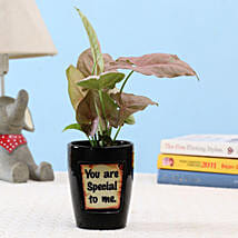Pink Syngonium In You Are Special Pot: Buy Indoor Plants