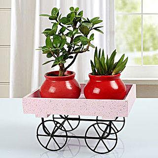 Plants In A Trolley: Send Home Decor for Diwali
