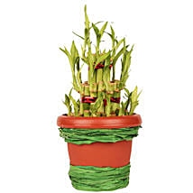 Pot Of Luck: Send Lucky Bamboo to Delhi