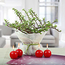 Red Candle Balls with Jade Plant: Diwali Gifts for Him