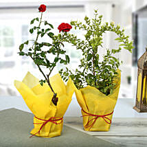 Rose And Jasmine Plant Combo: Good Luck Plants for Teachers Day