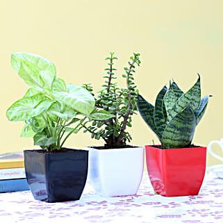 Set Of 3 Green Foliage Plants: