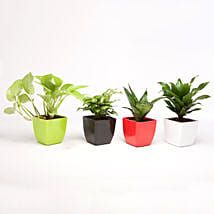 Set of 4 Green Plants in Beautiful Plastic Pots: Bestsellers Birthday Plants