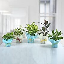 Set of 5 Refreshing Green Plants: Premium Plants