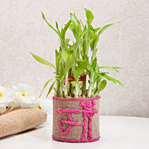 Sincerely Yours Mom Lucky Bamboo Plant: