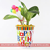 Starbright Plant In Colourful Birthday Pot: Send Plants for Birthday