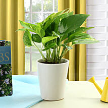 Striking Money Plant: Good Luck Plants for Mothers Day