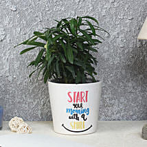 Striking Podocarpus Plant: Gifts for Daughters Day
