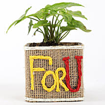 Syngonium Plant In For You Square Glass Vase: Send Plants to Mumbai