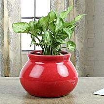 Syngonium Plant With Red Vase: Best Outdoor Plant