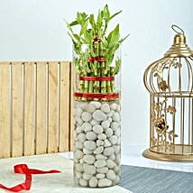 Three Layer Bamboo Decor Terrarium: Plants to Chennai