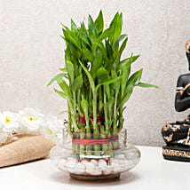 Three Layer Bamboo Good Luck Terrarium: Office Desk Plants