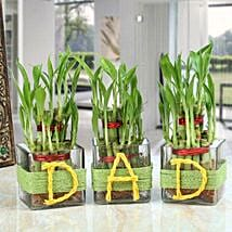 Three Lucky Bamboo Plants For Dad: Lucky Bamboo to Pune