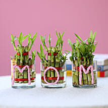 Three Lucky Bamboo Plants For Mom: Mothers Day Gifts to Pune