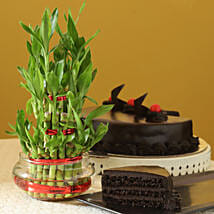 Truffle Cake N Three Layer Bamboo Plant: Lucky Bamboo
