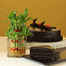 Truffle Cake N Two Layer Bamboo Plant: Cake Delivery in Jalna