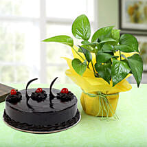 Truffle Cake With Money Plant: Plants - Same Day Delivery