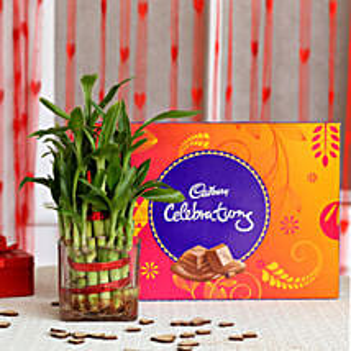 Two Layer Bamboo Plant & Cadbury Celebrations Combo:
