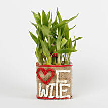 Two Layer Lucky Bamboo For Wife: Plants Delivery