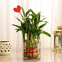 Two Layer Lucky Bamboo With Heart Shaped Tag: Plants to Mumbai