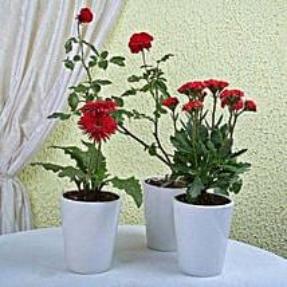 Ultimate Flowering Plants: Succulents