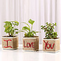 Set of 3 I Love Your Green Plants: Plants for Wife