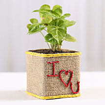 Syngonium Plant in I Love You Vase: Valentine Gifts Hyderabad