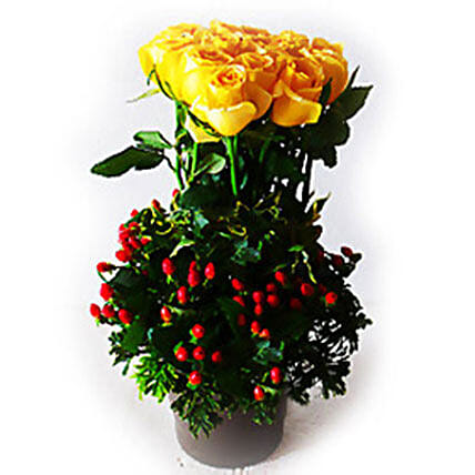 Yellow Roses in Plastic Pot