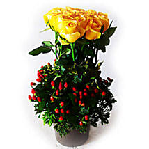 Yellow Roses in Plastic Pot: Mother's Day Gifts to Malaysia