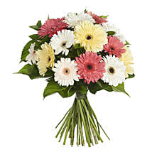 Daisy Gerbera Bouquet: Mother's Day Gifts to New Zealand