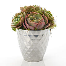 Designer Succulents: Send Birthday Flowers to New Zealand