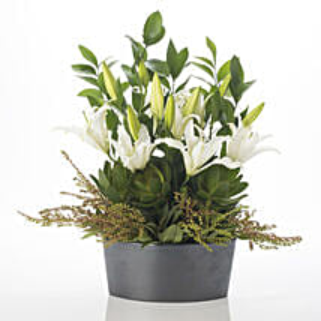 Harmonious Lilies: Wedding Gifts to New Zealand