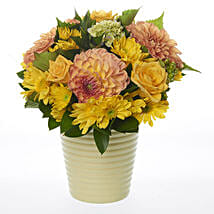 Seasonal Citrus Posy: Congratulations Flowers to New Zealand