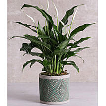 Spathiphyllum In Green Patterned Vase: Plant Delivery in South Africa