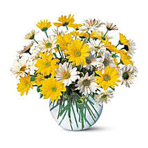 Dashing Daisies: Same Day Flowers for Him in Dubai UAE